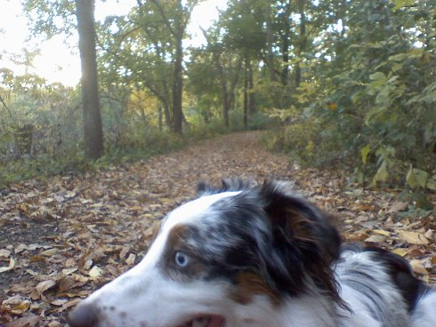 My dog Willow on a trail in the fall at Frick Park in Pittsburgh