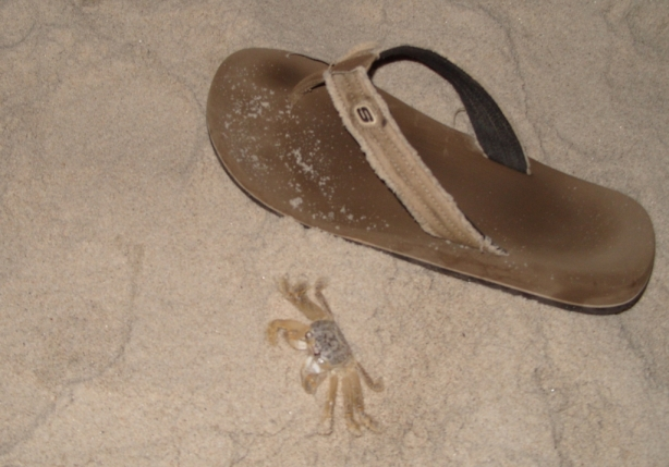 A small crab at night on the Oak Island beach next to my flip-flop