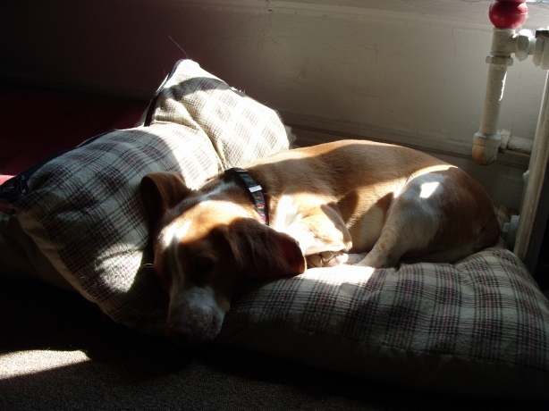 Daedalus - a dog apart